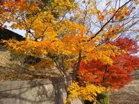 大阪柏原聖地霊園 平成22年園内紅葉